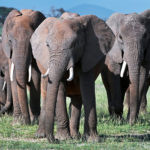 3 Days Amboseli Road Safari