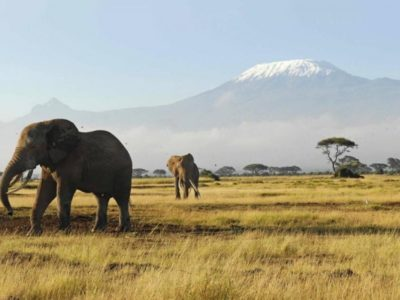 Elephants-Amboseli national park