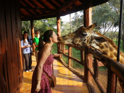 giraffe centre 3