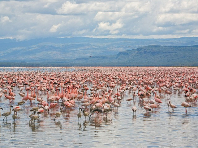 Lake Nakuru - Wikipedia