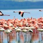 Manyara – Ngorongoro- Tarangire