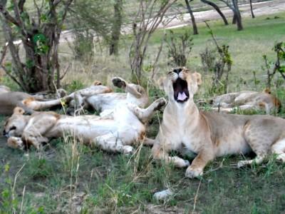 Tarangire – Lake Manyara & Ngorongoro Crater