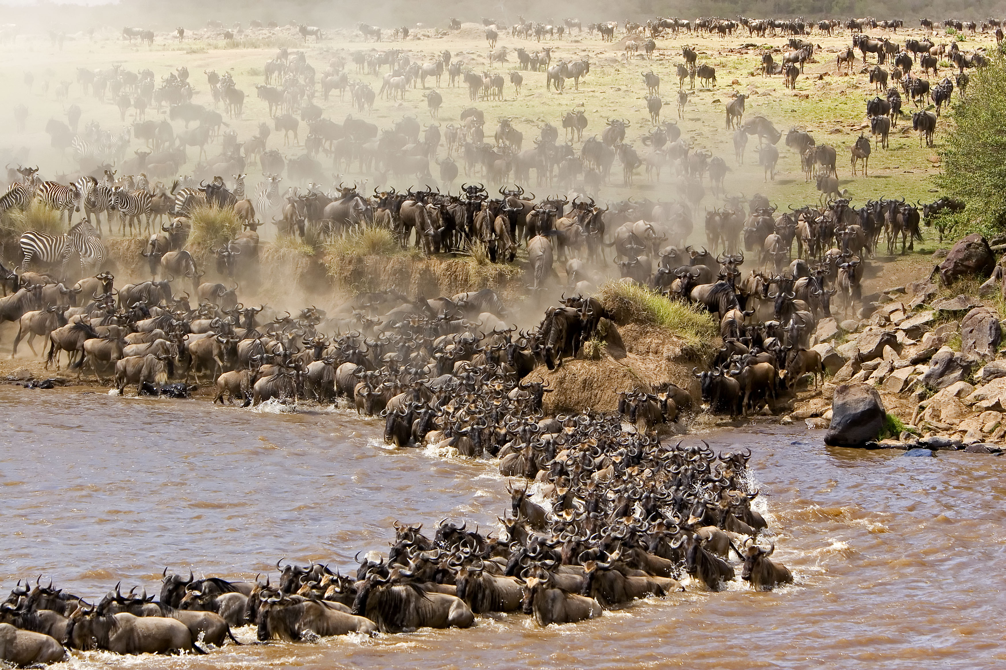 wildebeest Group with 62 items