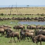 L.Manyara–Serengeti–Ngorongoro