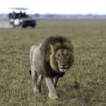 Kafue-Lower Zambezi safari